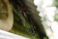 Schließen Sie oben von einem spiderweb mit Tropfen des Taus stockfotos