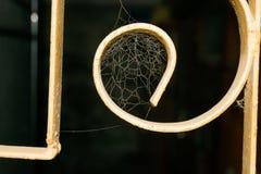 Schließen Sie oben von einem Spinnennetz in einem Fenster stockbilder