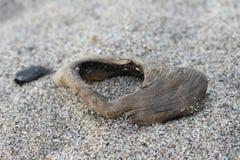 Schließen Sie oben von einem Stückchen Treibholz auf einem sandigen Strand Lizenzfreie Stockfotos