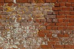 Schließen Sie oben von einer Backsteinmauer, die verwittert und gelbe und weiße Flechte hat wird lizenzfreies stockfoto