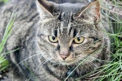 Schließen Sie oben von einer braunen Katze Stockfotos