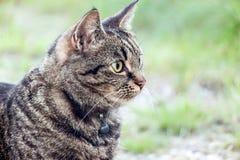Schließen Sie oben von einer braunen Katze Lizenzfreie Stockbilder