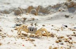 Schließen Sie oben von einer Geist-Krabbe stockbild