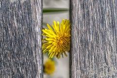 Schließen Sie oben von einer gelben Blume stockbild