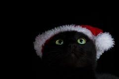 Schließen Sie oben von einer Grün gemusterten schwarzen Katze mit Sankt-Hut, der oben schaut Lizenzfreies Stockbild