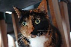 Schließen Sie oben von einer Katze unter einem Stuhl Stockfotografie