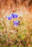 Schließen Sie oben von einer lila Blume in der Wiese Lizenzfreies Stockfoto