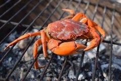 Schließen Sie oben von einer rohen Krabbe, die auf einem heißen Grill kocht Lizenzfreies Stockbild