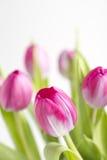 Schließen Sie oben von einer rosafarbenen Tulpeblume mit anderen nach Stockbilder