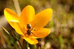 Schließen Sie oben von einer schönen Blume und von einer Biene stockfotos