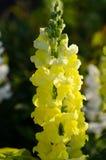 Schließen Sie oben von einer schönen gelben Blume lizenzfreies stockfoto
