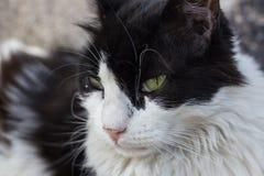 Schließen Sie oben von einer sitzenden Katze Lizenzfreie Stockfotos