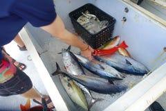 Schließen Sie oben von einigen Thunfischen innerhalb eines weißen Kastens am Fort Lauderdale, Florida Lizenzfreie Stockfotografie