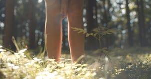 Schließen Sie oben von Frau ` s Handrührender Anlage auf grünem Naturhintergrund Stockfoto
