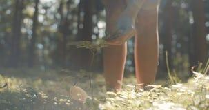 Schließen Sie oben von Frau ` s Handrührender Anlage auf grünem Naturhintergrund stock footage