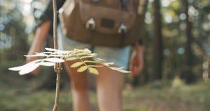 Schließen Sie oben von Frau ` s Handrührender Anlage auf grünem Naturhintergrund stock video footage