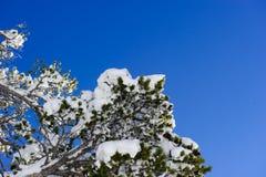 Schließen Sie oben von gefrorenen Zweigen und vom Schnee, die gegen blauen Himmel fällt Lizenzfreies Stockbild