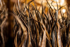 Schließen Sie oben von getrocknetem Aal auf Bukittinggi-Markt Lizenzfreies Stockfoto