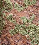 Schließen Sie oben von Lichen Growing auf einem Felsen stockfotografie