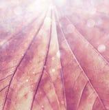 Schließen Sie oben von strukturiertes braunes Blatt hellen bokeh Lichtern Träumerisches Konzept Stockfoto