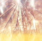 Schließen Sie oben von strukturiertes braunes Blatt hellen bokeh Lichtern Träumerisches Konzept doppelter expousure Effekt Stockbild