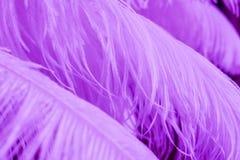 Schließen Sie oben von vielen weichen purpurroten Federn Stockfoto