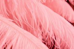 Schließen Sie oben von vielen weichen rosa Federn Stockfotografie