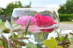 Schließen Sie oben von zwei Rosen, die in eine Schüssel schwimmen stockfoto