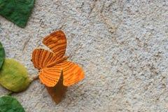 Schließen Sie oben von Zwischen-Maplet (Chersonesia-intermedia rahrioid Lizenzfreie Stockbilder