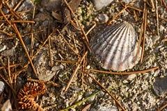 Schließen Sie schmutzige Muschelschale auf Boden Hintergrund ab lizenzfreie stockbilder