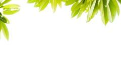 Schließen Sie zusätzliches Format ENV ein (Adobe-Illustrator) Stockfotos