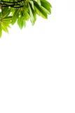 Schließen Sie zusätzliches Format ENV ein (Adobe-Illustrator) Lizenzfreie Stockfotografie