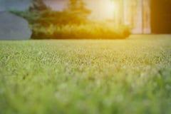 Schließen Sie herauf grüne Rasenfläche mit Unschärfeparkhintergrund, Frühling und Sommerkonzept lizenzfreies stockfoto