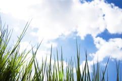 Schließen Sie oben von, unter der Ansicht des frischen neuen Wachstumsgrases und durch Gras schauen, Morgenstrahlen der Sonne, ge stockfotografie