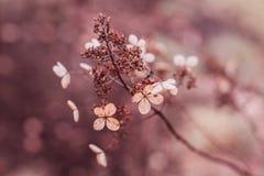 Schlie?en Sie oben von den trockenen Hortensieblumen, die auf Natur ?u?er sind stockfoto