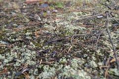 Schlie?en Sie oben von der gr?ner Flechte und von Moss Textures Growing auf einem Felsenhintergrund stockbild