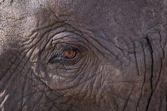 Schlie?en Sie oben von einem Elefantauge lizenzfreies stockfoto