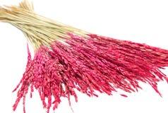 Schließen Sie herauf rosafarbenen ungeschälten Reis, trockene Blumendekoration Stockbilder
