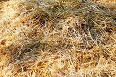 Schließen Sie oben vom Heuschober auf Farm der Tiere Stockfoto