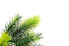 Schließen Sie oben vom Tannenbaum Stockfoto