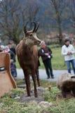 Schliersee, Германия, Бавария 05 11 2017: Езда Leonhardi в баварском Schliersee Стоковое Изображение RF