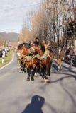Schliersee Tyskland, Bayern 08 11 2015: Utkasthästar i Schliersee i Leonhardifahrt Arkivfoto