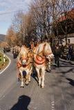 Schliersee Tyskland, Bayern 08 11 2015: Utkasthästar i Schliersee i Leonhardifahrt Royaltyfri Fotografi