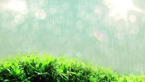 Schlingen Sie fähige regnende Tropfen der Lichter auf grünem Blatt stock video
