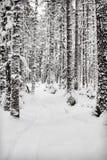 Schlitten-Weg im Wald stockfotos