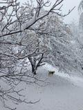 Schlittenhund im Schnee Lizenzfreies Stockfoto