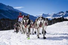 Schlittenhunde beim Geschwindigkeitslaufen Lizenzfreies Stockbild