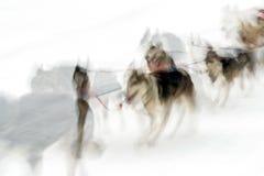 Schlittenhunde im schneebedeckten Land stockfotos