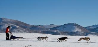 Schlittenhunderennen-Gebirgshintergrund Stockfoto