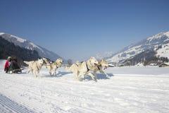 Schlittenhundrennen in Lenk/in der Schweiz 2012 Stockbild